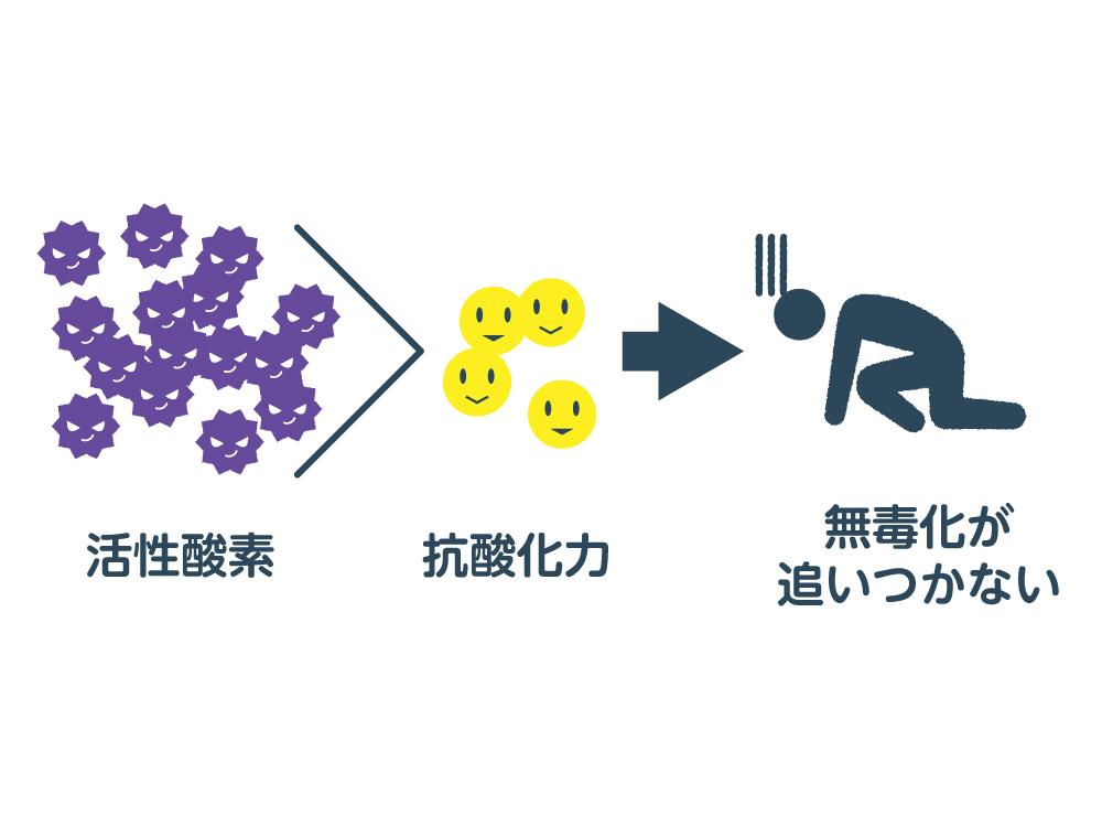抗酸化機能