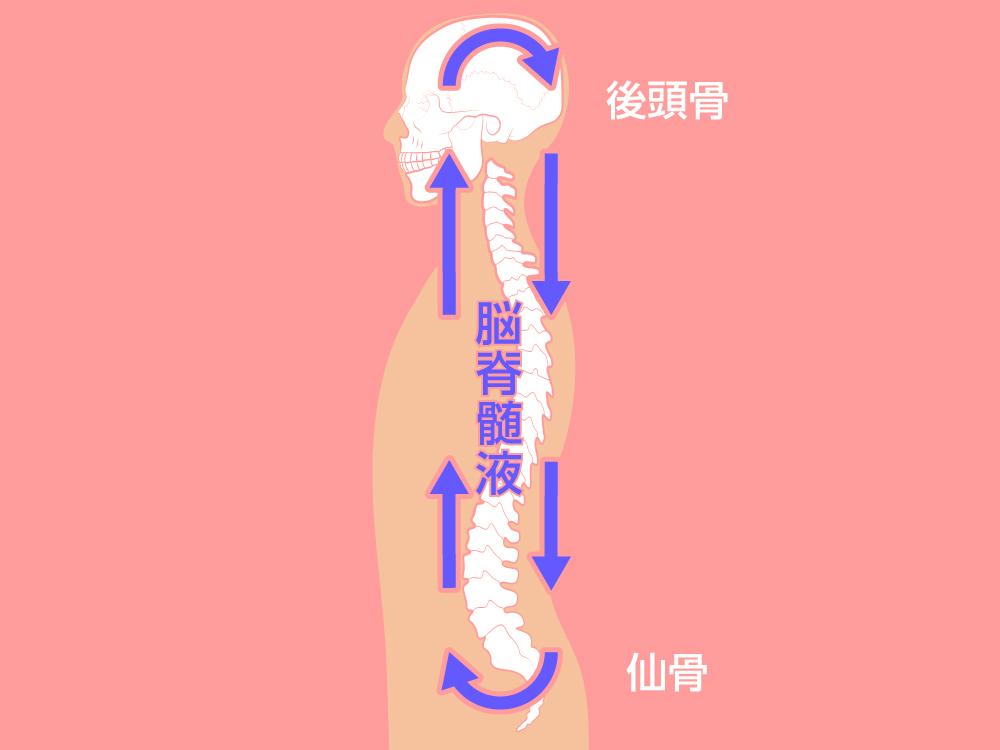 頭と骨盤の関係性